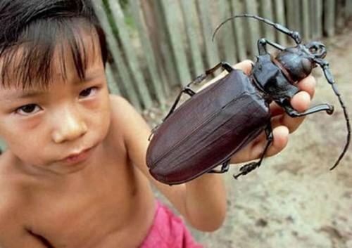 عکس های حیرت آور از بزرگترین حشره های دنیا