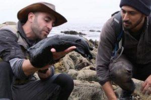 کشف یکی از بزرگترین نوع حلزون در آمریکا (عکس)