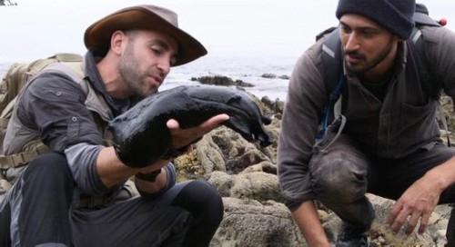 کشف یکی از بزرگترین نوع حلزون در آمریکا (عکس)  کشف یکی از بزرگترین نوع حلزون در آمریکا (عکس) 147301010261287 irannaz com