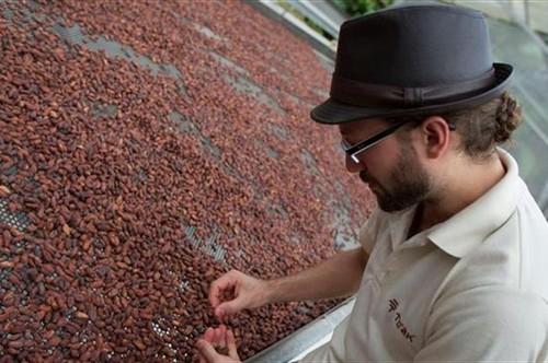 عکس هایی از برداشت میوه کاکائو در اکوادور