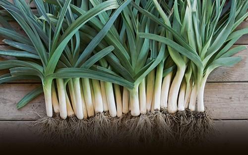 از خواص سبزی تره چه می دانید؟