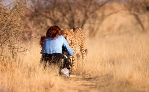 زن جوانی که با این یوزپلنگ رابطه ی عاشقانه ای دارد (عکس)