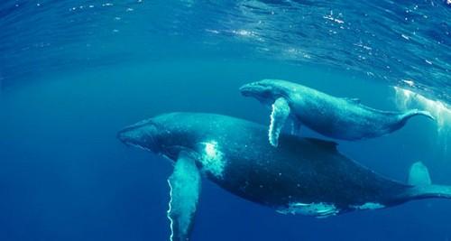 عکس هایی از عجیب ترین موجودات روی زمین
