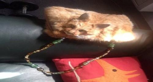 این کیف عجیب با پوست گربه مرده درست شده است (عکس)