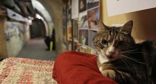 ماجرای تنها رییس جمهور گربه جهان چیست؟ (عکس)