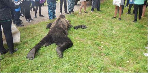 گرفتن عکس های سلفی دردناک با این خرس