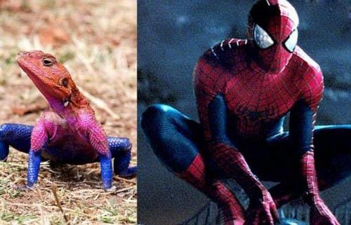 عکس هایی از مارمولکی که به مرد عنکبوتی شبیه است