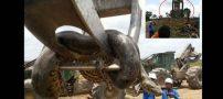 کشف ماری با وزن 400 کیلو در شمال برزیل (عکس)