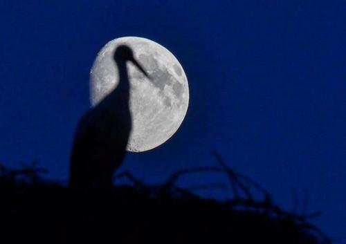 این عکس زیباترین تصاویر ثبت شده از ماه هستند!!