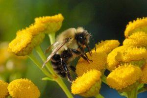 داستان پندآموزی و زیبای زنبور و ظرف عسل