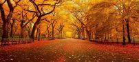 شعر خواندنی بیچاره پاییز