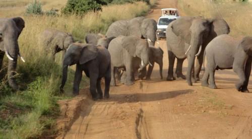 عکس هایی از مبارزه با فیل ها با روشی عجیب و غریب