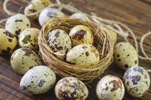 از خواص جالب تخم بلدرچین چه میدانید؟!
