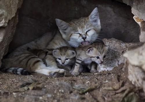 مهر مادری این حیوانات شما را شوکه میکند (عکس)