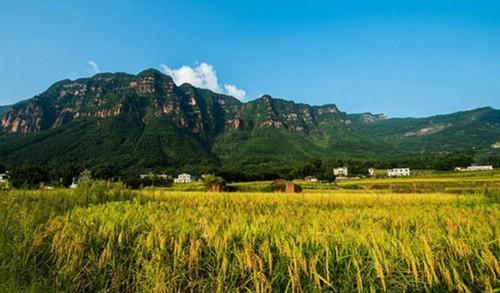 عکس های جذاب از فصل برداشت محصولات در چین