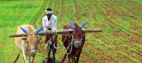 داستان زیبای کشاورز و ساعت