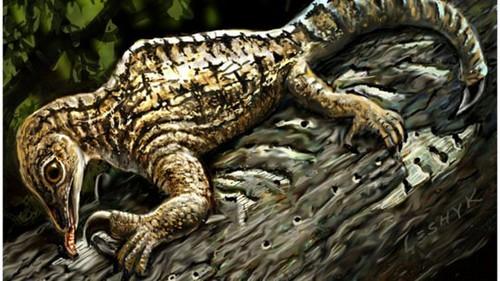 عکس هایی از قدیمی ترین فسیل کشف شده از خزندگان