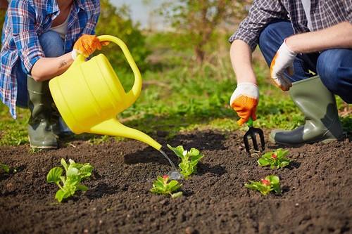 چگونه در خانه کاشت سبزیجات انجام دهیم؟
