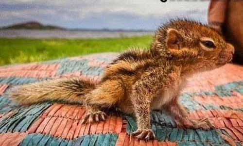 عکس هایی از نجات زیباترین سنجاب جهان