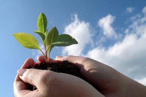 دانستنی هایی درباره ی مدارس محیط زیستی