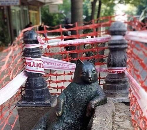 عکس هایی از مجسمه گربه معروف استانبول
