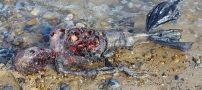 پیدا شدن یک پری دریایی واقعی در سواحل انگلیس (عکس)