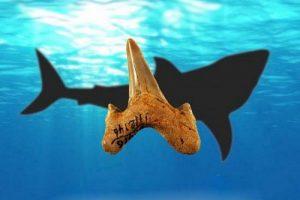 کشف دندان کوسه با قدمت 20 میلیون سال (عکس)