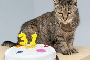 پیرترین گربه ی دنیا با 31 سال سن (عکس)