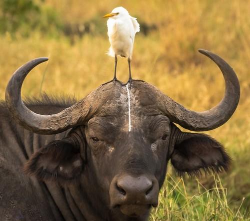عکس های خنده دار از ژست های حیوانات در برابر دوربین