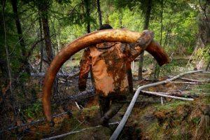 عکس های دیده نشده از تجارت شکارچیان ماموت