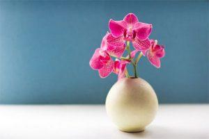 چگونه از گل ارکیده نگهداری کنیم؟