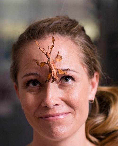 زندگی جنجالی این زن با حشرات سمی (عکس)