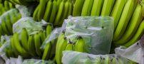 از فواید موز سبز چه می دانید؟