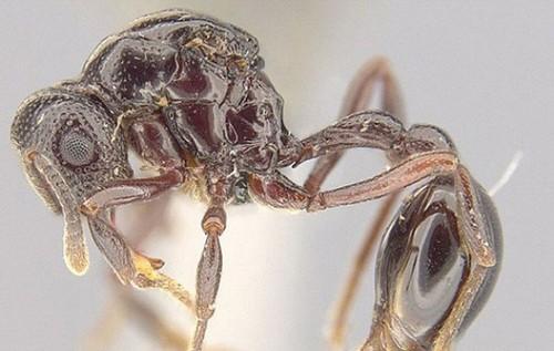 کشف عجیب یک مورچه در استفراغ قورباغه (عکس)