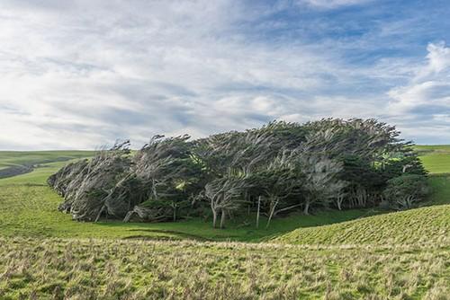 عکس هایی از عجیب و غریب ترین درختان جهان