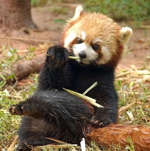 عکس های خنده دار جدید از ژست حیوانات
