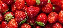 چگونه در خانه توت فرنگی پرورش بدهیم؟