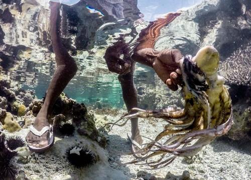 شکار هشت پا در جزیره ی تانزانیا (عکس)