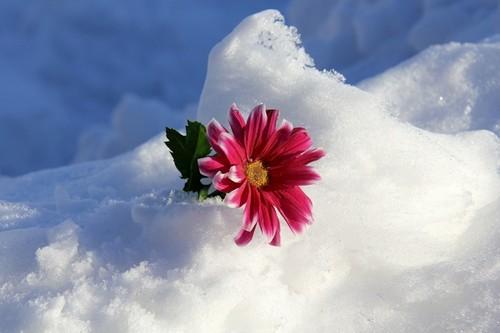نحوه ی نگهداری از گل ها در فصل زمستان