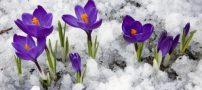 نحوه ی پرورش گل در فصل زمستان