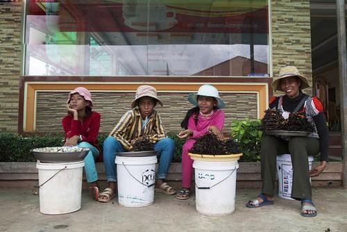 خوردن کباب رتیل در استان کامپونگ (عکس)