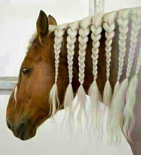 عکسهای دیدنی از زیباترین اسب ها
