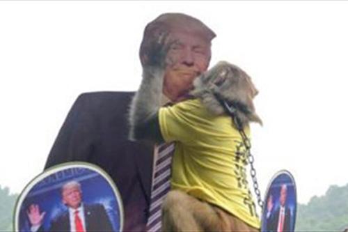 بوسه ی یک میمون بر صورت ترامپ جنجالی شد +عکس