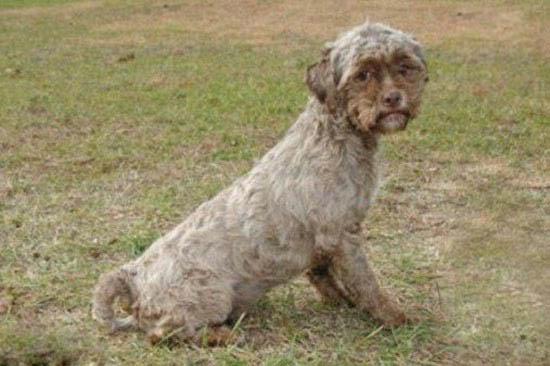 پیدا شدن سگی عجیب با صورتی شبیه به انسان +تصاویر