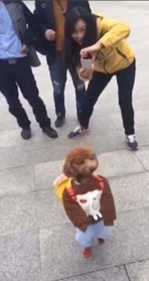 سگی که مانند یک دانش آموز راه میرود +تصاویر