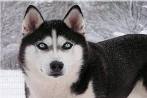 خودکشی سگی در برج الهیه از گرسنگی +عکس