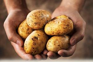 جنجال مرگ اعضای یک خانواده بخاطر سیب زمینی