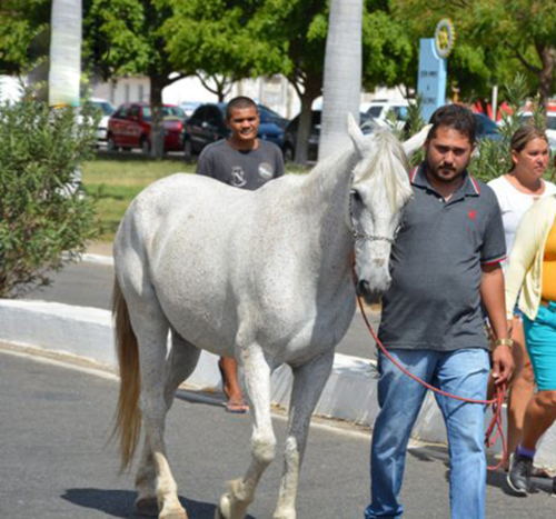 رفتار عجیب این اسب در مرگ صاحبش +تصاویر