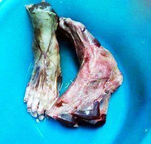 جنجال خوردن پاهای قطع شده انسان در رستوران +عکس 18+