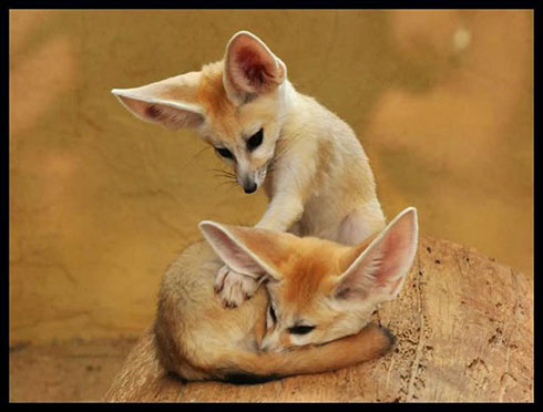 عکس های زیبا از حیوانات بامزه